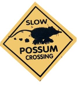 possum crossing