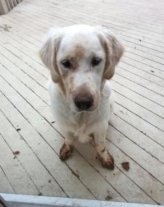 Monty mud 1