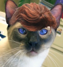 cat with toupee