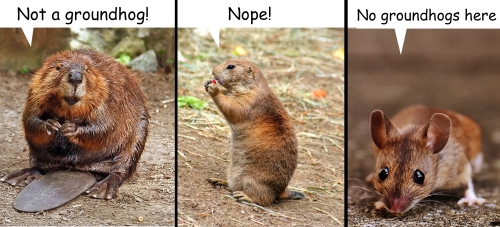 not-groundhogs